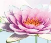 Water Lily - poster
